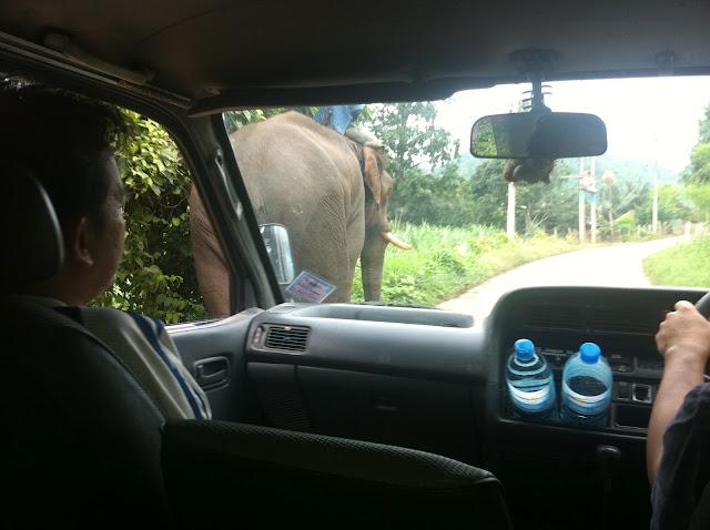 Adelantando a un elefante