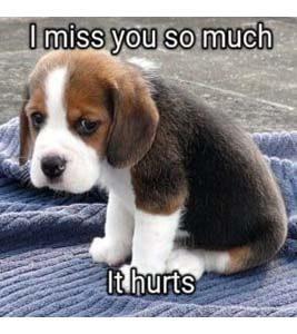 i miss you meme  29