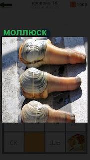 Под солнечным светом на столе лежат три моллюска