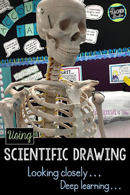 Using scientific drawing along with information reading and writing is a great way to get students thinking deeply and looking closely for details.  This blog post shows how we did it with our skeletal system unit.  teaching skeletal system, skeletal system lessons, human body activities, teaching human body