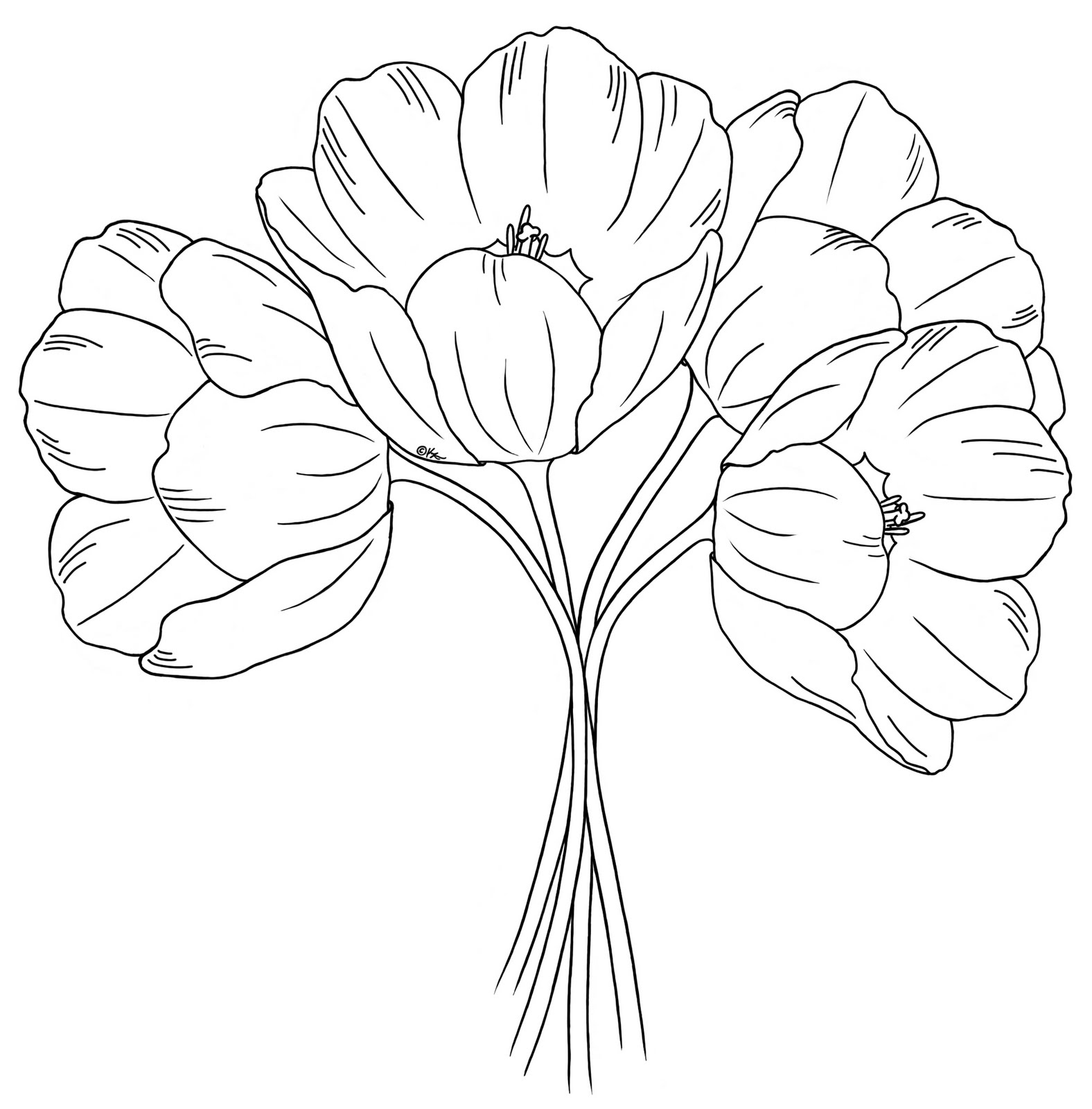 Tulip Flower Outline Sketch Coloring Page