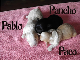 http://bichon-havanese.blogspot.hr/