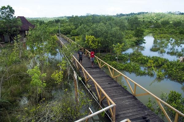 Brackish Forest Tourism
