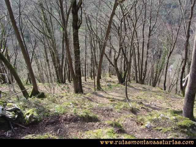 Ruta Puente Vidosa, Jucantu: Bosque