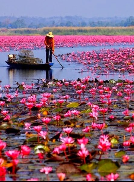 How to Visit Thailand on a Budget | Red Lotus Sea, Located in Udonthani | Thailand