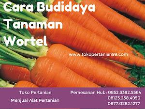 Cara Budidaya Tanaman Wortel