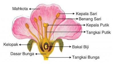 Bagian - bagian bunga dan fungsinya - pustakapengetahuan.com
