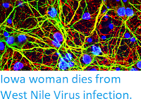 http://sciencythoughts.blogspot.com/2017/09/iowa-woman-dies-from-west-nile-virus.html