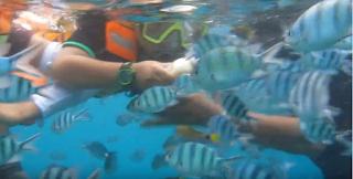 snorkeling wisata karimunjawa