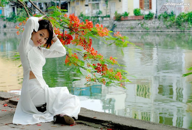 y nghia hoa phuong