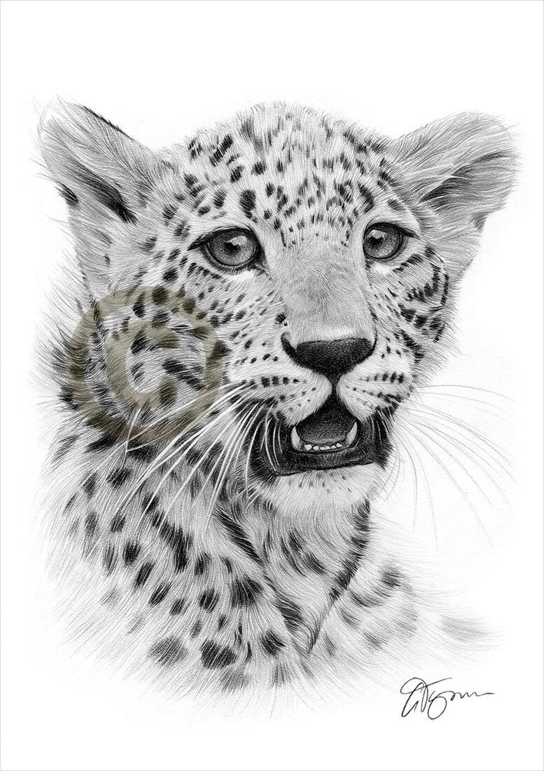 05-Cheetah-Cub-Gary-Tymon-Wildlife-and-Domestic-Animal-Pencil-Drawings-www-designstack-co
