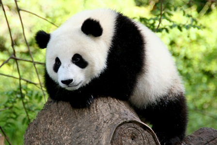 Google Panda 4.2 is Rolling Out Now : Affecting only 2 to 3% of Queries : eAskme