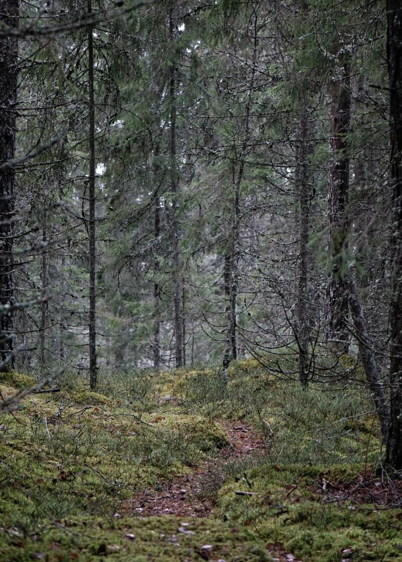 Metsä, polku