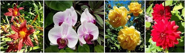 fleur, Terra Botanica, parc floral, bullelodie
