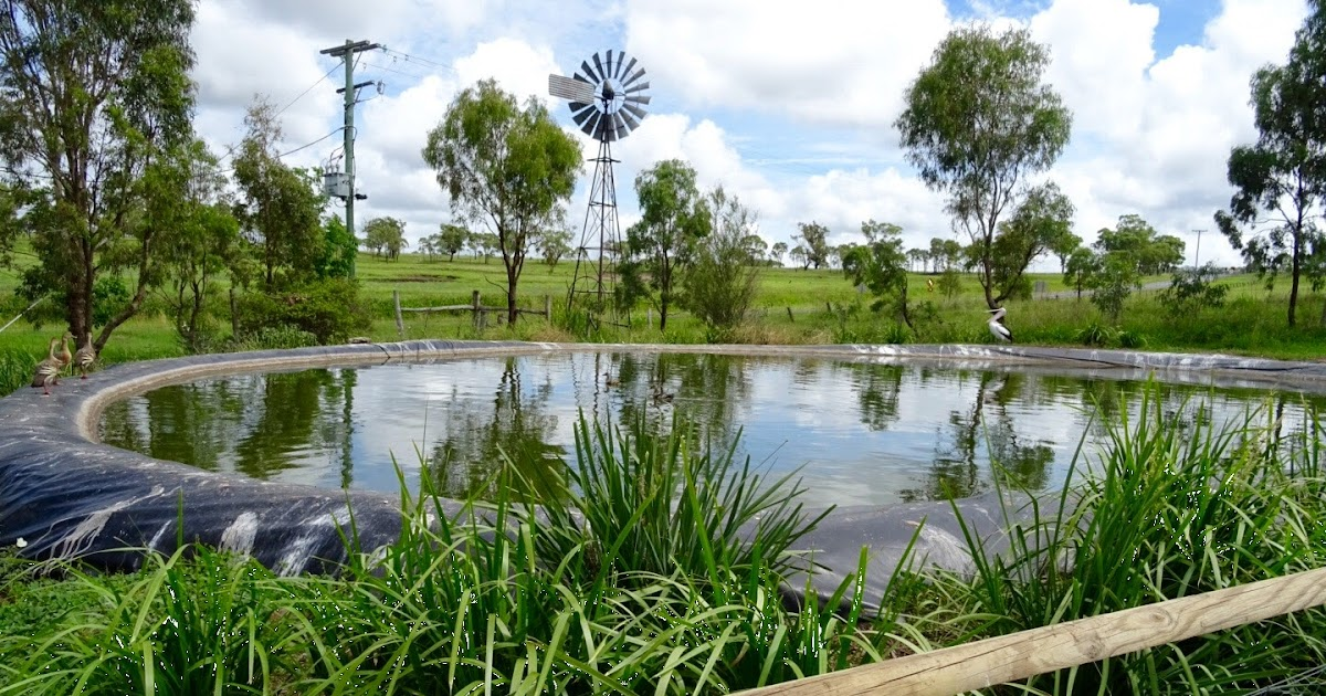 Darling Downs Zoo - Review