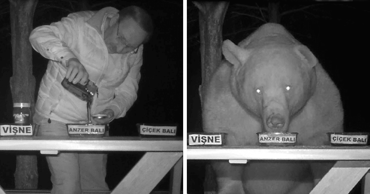 Bears Kept Stealing Honey From A Man's Bee Farm, So He Turned Them Into Honey Tasters