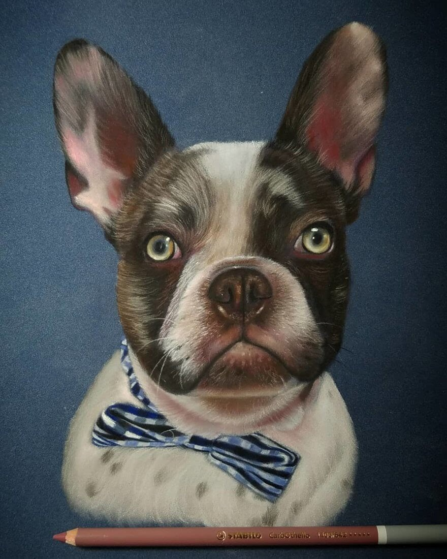 01-French-Bulldog-Frenchie-Rene-Lopez-Animal-Pencil-and-Pastel-Portrait-Drawings-www-designstack-co