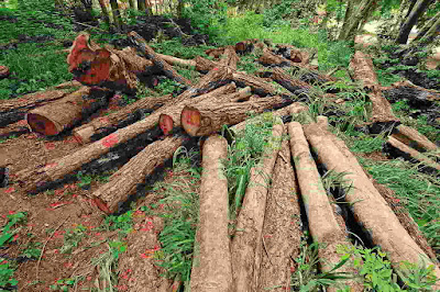 Deforestation in the tropics affects climate around the world.