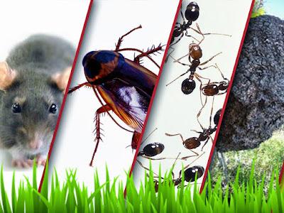 شركة مكافحة حشرات بجدة - وأفضل شركة رش مبيدات في جده