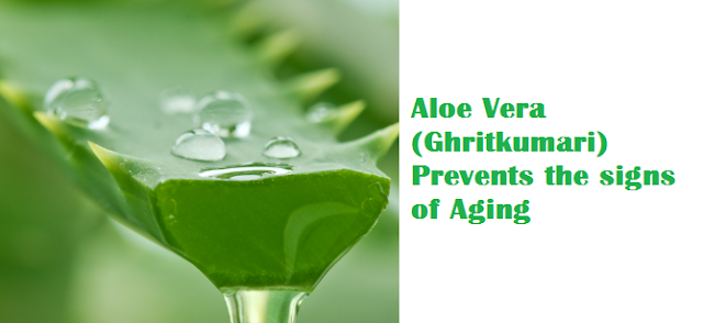 Aloe Vera (Ghritkumari) Prevents the signs of Aging