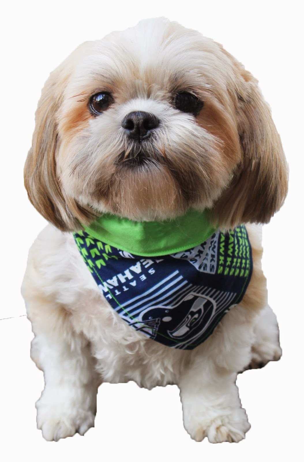 Ben franklin crafts and frame shop make a seattle seahawks dog make a seattle seahawks dog bandana for game day jeuxipadfo Choice Image