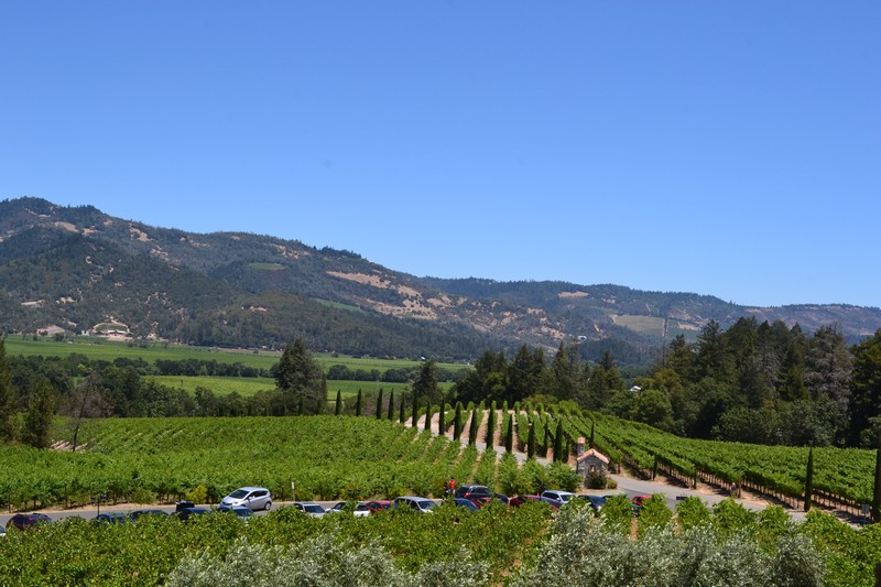 Napa Valley, vignoble, vin, californie, calistoga