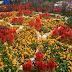 Flower Dome, Istana Megah Para Bunga