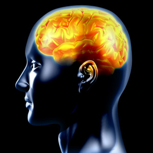 Know more facts about Human Brain