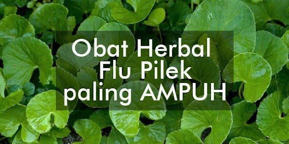 4 Obat Herbal Untuk Flu Pilek Paling Ampuh