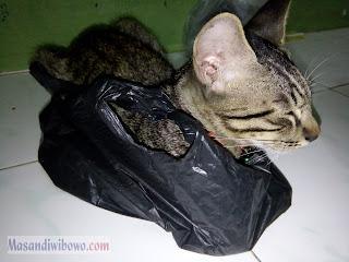 Rocky kucing istimewa