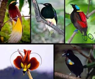 Daftar Harga Burung Lengkap di Pasaran 2018