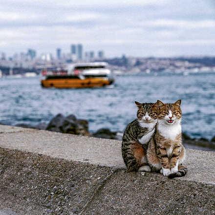 Homem flagra dois gatos se abraçando e faz cliques superfofos