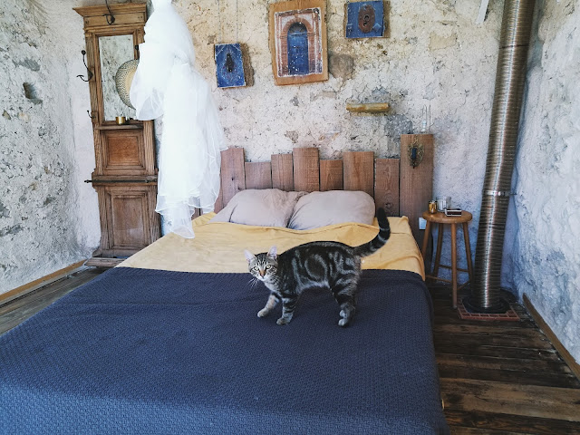 Cat standing on bed