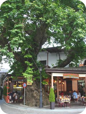 taverna cu platan urias