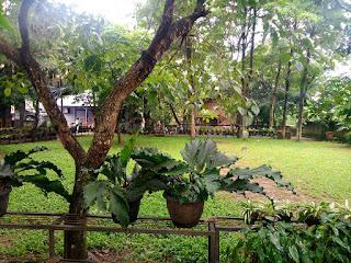 sekolah alam bintaro