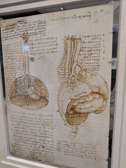 5 Reasons to Visit the Leonardo da Vinci: A Life in Drawing Exhibition at Sunderland Museum & Winter Gardens with Kids - anatomy drawings of the lungs