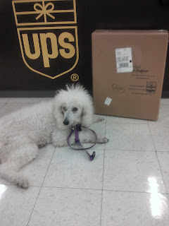 Dog laying next to box