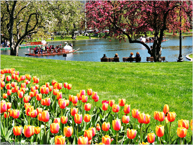 Primavera 2016 Boston Public Garden