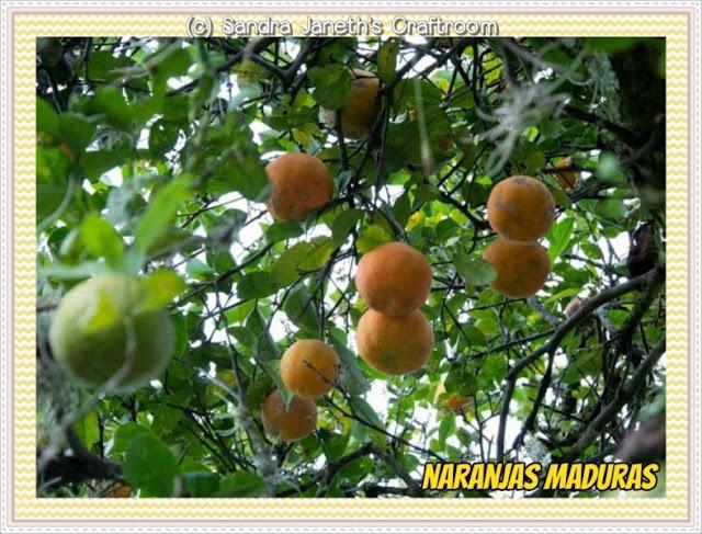 Naranjas de la Finca