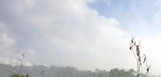 Vêm sendo uma constante a deslealdade para com a população de Canavieiras, que durante este verão vem sofrendo não apenas com o calor, mas com a fumaça leva junto um odor como companhia.
