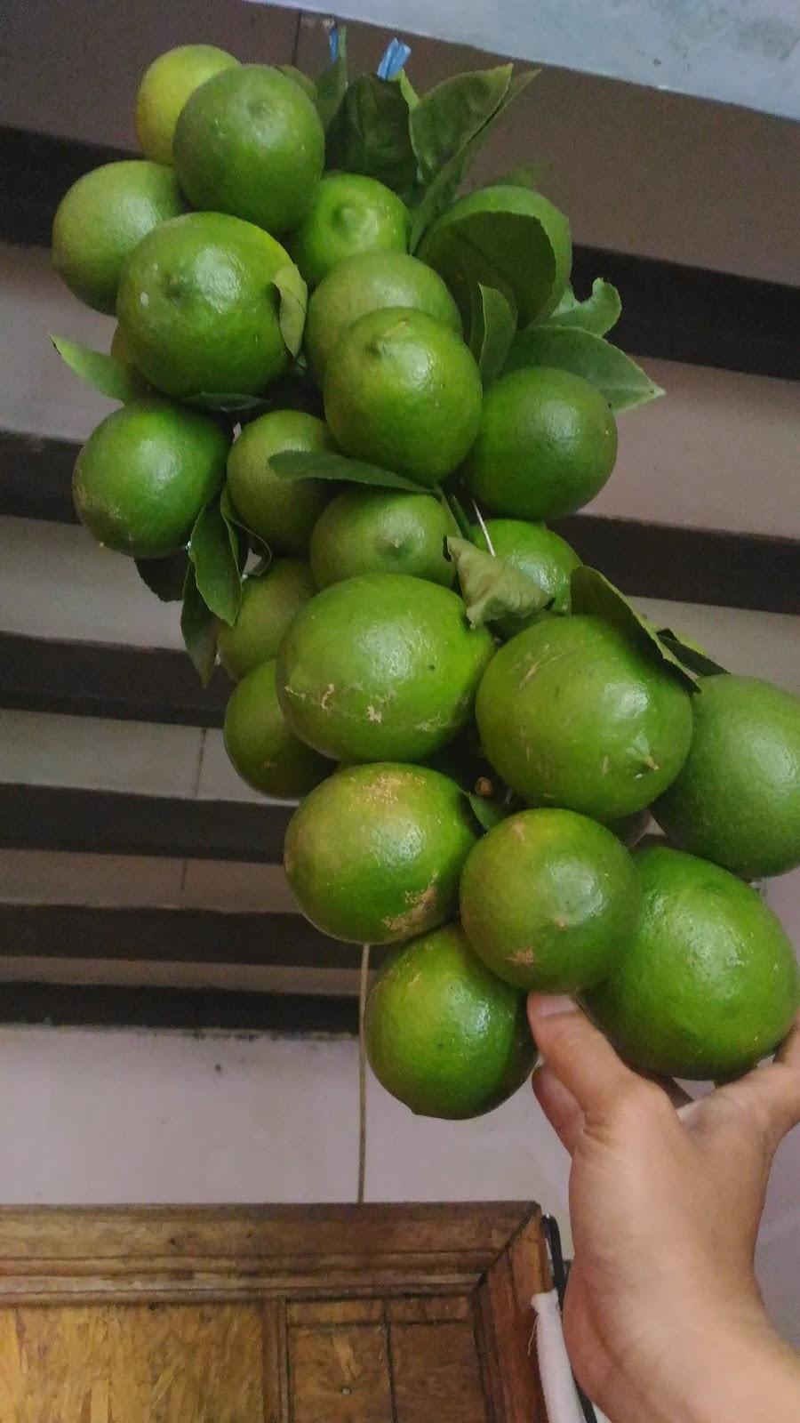 35 Manfaat Jeruk Lemon Berdasarkan Kajian Penelitian
