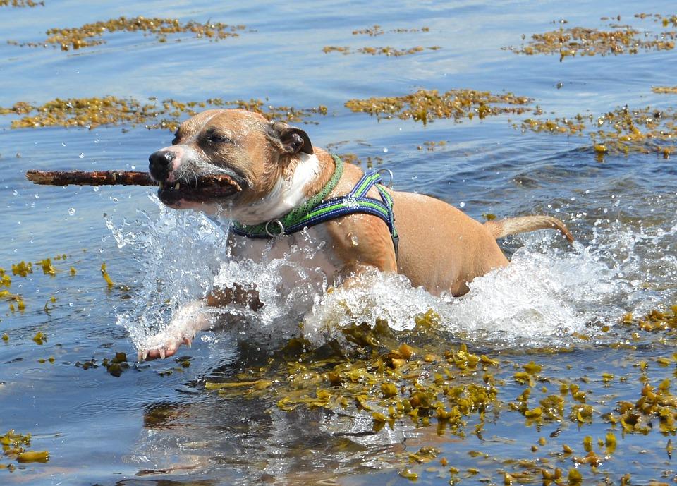 ये हैं दुनिया के सबसे खतरनाक कुत्ते, ले सकते हैं किसी की भी जान,Strongest Dog Breeds in the World