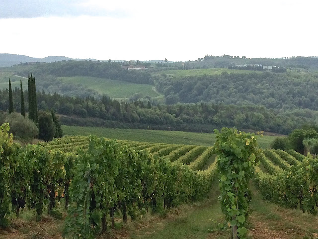 grape vineyard in Tuscany