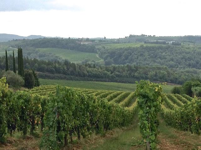grape vineyard in Tuscany