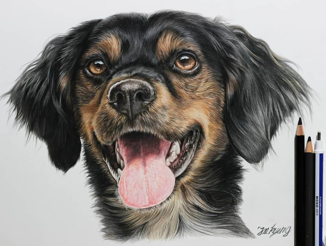 05-Black-Brittany-Spaniel-Jae-Kyung-Domestic-and-Wild-Animals-Pencil-Drawings-www-designstack-co