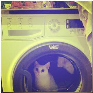 service mesin cuci di bsd, service mesin cuci bsd, servis mesin cuci bsd, jasa service mesin cuci bsd serpong