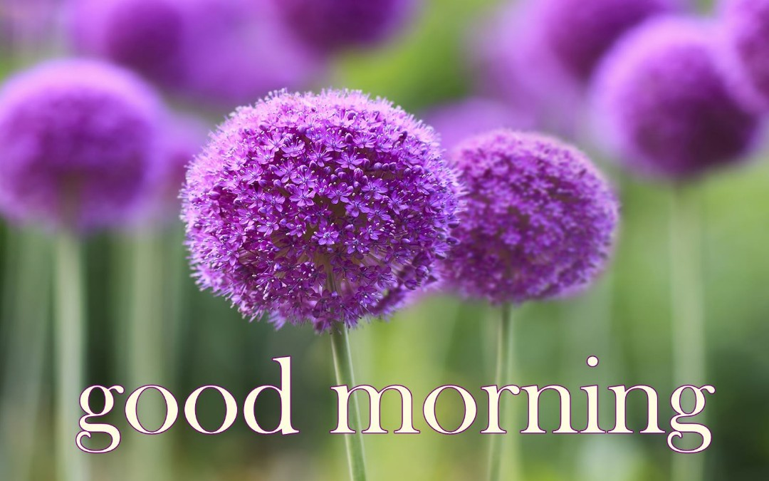 Good Morning Flowers Images 45 Wallpapers Pics For Dp
