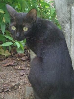 Mitos Tentang Kucing Hitam di Indonesia dan Berbagai Negara