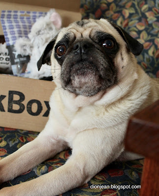 Liam the pug with his BarkBox
