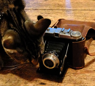 A cat with a dacora 1 camera
